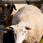 It's All About Ewe
