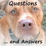 MBFLP 102 – Family Life Q&A