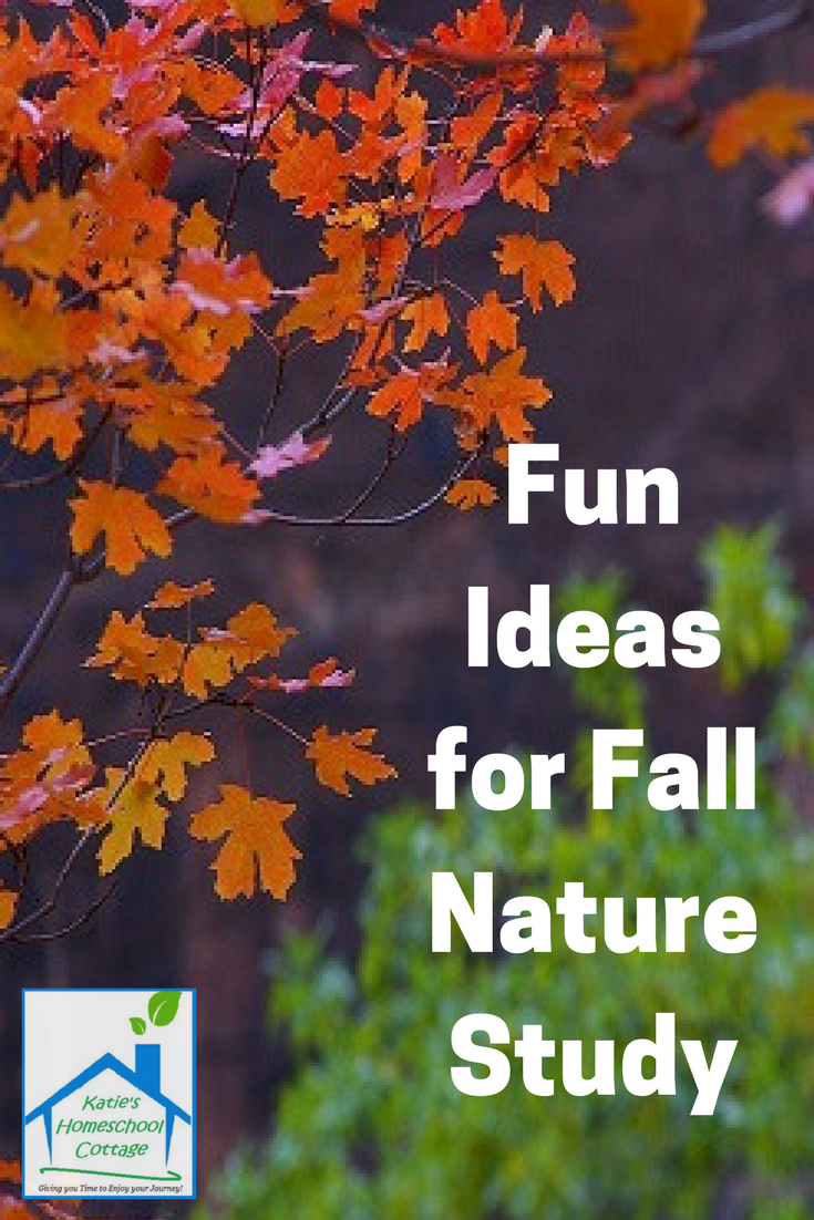 Fun Ideas for Fall #homeschool #homeschooling #fallreading #fallactivities #literarycafepodcast #reluctantreader #readingfun #makereadingfun