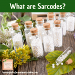 What are Sarcodes?