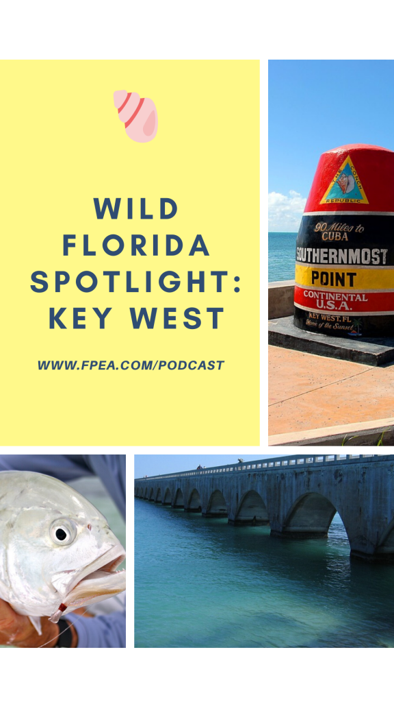 Wild Florida Spotlight: Key West
