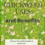 Chickweed Uses and Benefits