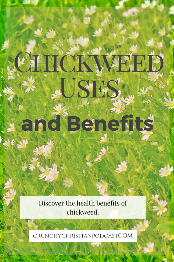 Join Julie Polanco on this episode of Crunchy Christian Podcast as she discusses chickweed uses and benefits!