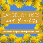 Dandelion Uses and Benefits