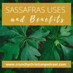 Sassafras Uses and Benefits