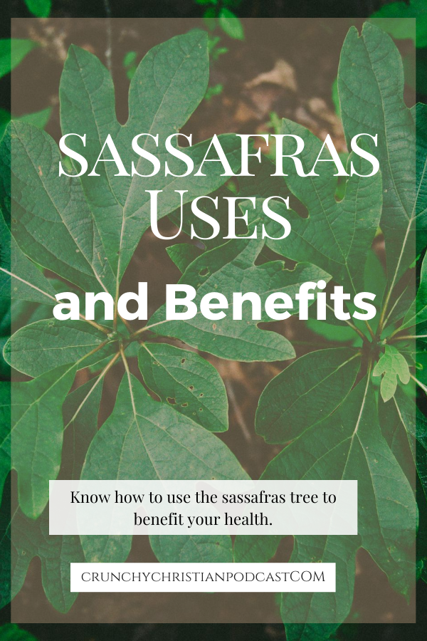 Join Julie Polanco on this episode of Crunchy Christian Podcast as she discusses sassafras uses and benefits.