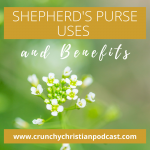Shepherds Purse Uses and Benefits