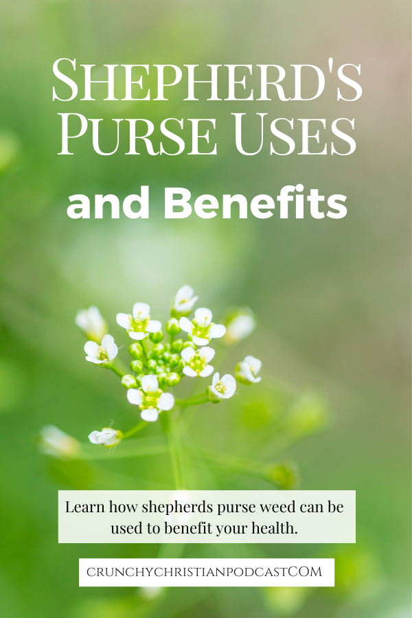 Join Julie Polanco on this episode of Crunchy Christian Podcast as she discusses shepherd's purse uses and benefits.