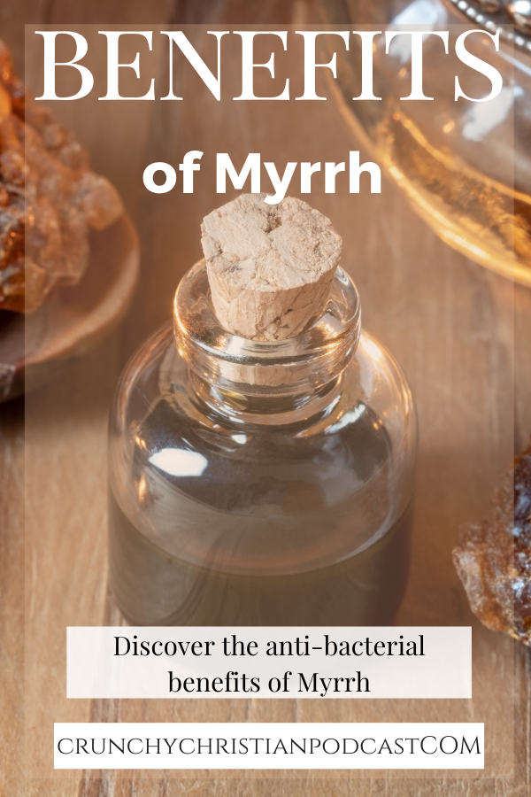 "Ever wondered about myrrh? What is it and what are the benefits of myrrh? Why was it one of the gifts of the magi? Listen to this week's podcast as Julie discusses this ancient resin. The History of Myrrh Commiphora myrrha grows in the same areas as Frankincense, namely the Horn of Africa and parts of the Middle East. It is harvested in a similar way, too. Harvesters cut a wound in the trunk of the tree until it bleeds sap. The sap is allowed to harden and then it is scraped off the tree and collected. This hardened resin is then used in a variety of ways. According to Herodotus (5th century BC): ""Arabia is the only country which produces frankincense, myrrh, cassia and cinnamon...the trees bearing the frankincense are guarded by winged serpents of small size and various colors.""  Myrrh was often associated with death. The ancient Egyptians used it along with natron as part their embalming process. In addition, there are several Biblical references to myrrh. The first one, Genesis 37:25, mentioned it as part of a caravan on their way to Egypt. In Exodus 30:23-25, myrrh is stipulated as part of the anointing oil. And in Esther 2:12, we discover that it was one of the oils used to prepare women for presentation to the king. And of course, myrrh is mentioned in the New Testament at Jesus' birth and at his crucifixion. So, it was a component of the sacred anointing oil, used as perfume, and used during burial. In other parts of the world, it was part of a purification ritual for new brides and a means of purifying one's home.  The benefits of myrrh have been used in Traditional Chinese Medicine (TCM) and in Ayurveda for centuries, even though the Chinese obviously had to import it from the Arabians. In Ayurveda, it has been used to treat mouth ulcers and gingivitis, female reproductive issues, infected wounds, and bronchial conditions. In TCM, it has been used to promote blood circulation and dissolve swellings and other stasis issues, such as rheumatic and arthritic complaints. A related species, guggul, is used similarly in Ayurveda.  Benefits of Myrrh It's interesting that myrrh was historically used in instances where bacterial growth needed to be inhibited or controlled. Modern research shows that it is highly effective at killing bacteria. Burning it in houses of worship helped control the spread of disease. And, using it in embalming the dead helped slow the decay of the body. Because myrrh has anti-bacterial properties, using it in mouthwash and toothpaste makes sense to kill oral bacteria that contribute to mouth sores and gingivitis. Researchers have also studied additional benefits of myrrh to help speed wound healing and prevent infection. Results are promising.  Myrrh oil shows promise in treating chronic headaches and certain parasitic infections. In addition, a few studies show that it may slow the growth of cancer cells in the liver, prostate, breast, and skin. Finally, test tube studies suggest that it may effectively kill some strains of mold as well as parasites and bacteria. Note that the Lord himself told Moses to use myrrh in the sacred oil. Perhaps, just like ceremonial hand washing and not eating unclean animals, the Lord was giving him measures for staying healthy. Long before people knew about microbes, God gave them instructions for how to prevent the spread of disease. God truly provides us with instructions for all areas of life, not just spiritual and emotional issues.  Enjoy this highly prized resin from the Middle East this Christmas season!"