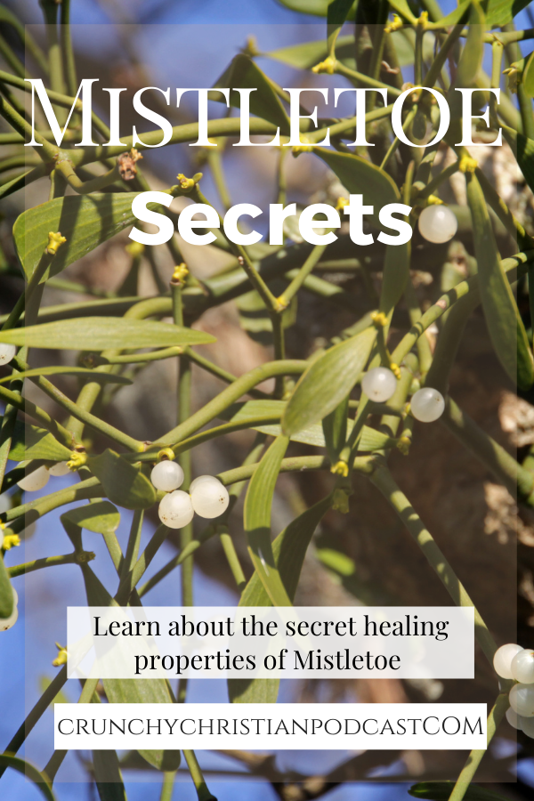 Mistletoe Secret
