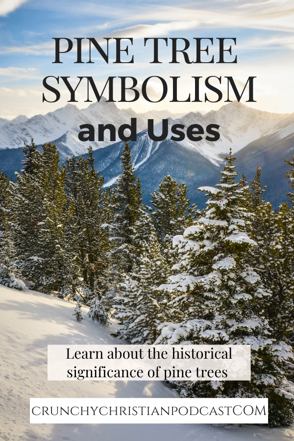 How about some historical fun with pine tree symbolism and uses?