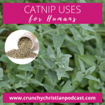 Catnip Uses for Humans