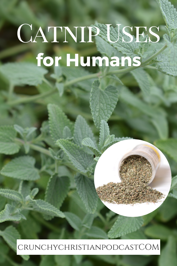 Join Julie on this episode of Crunchy Christian podcast to learn more about catnip.