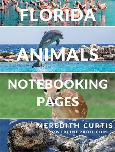 Florida Animals Notebooking Pages by Meredith Curtis